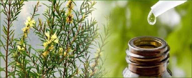 How to Cure Toenail Fungus with Tea Tree Oil